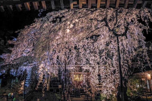 香芝市に咲く桜